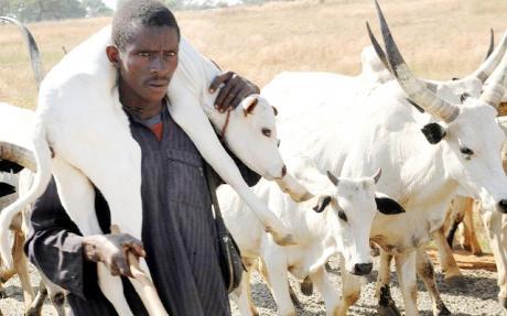 cattle rearer