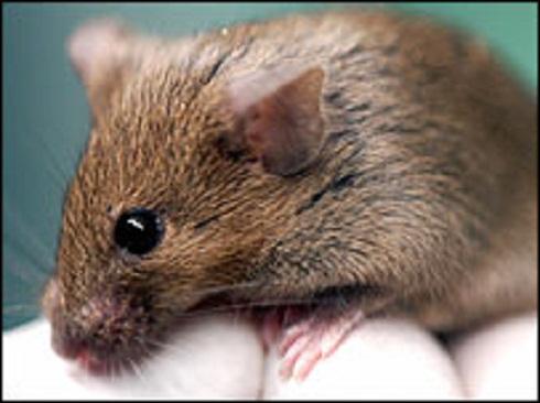 mouse bbc