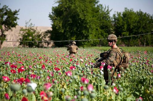 opium-fields-13-1024x682