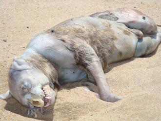Montauk Monster Rotten Carcass