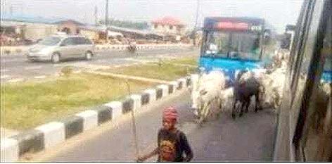 Fulani taking over BRT lane in Lagos