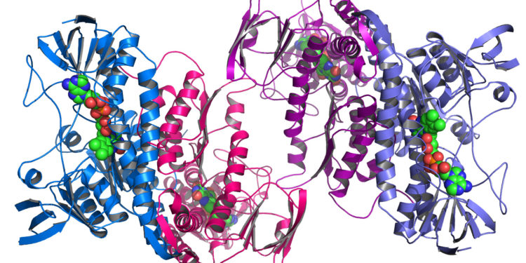 argonnes_midwest_center_for_structural_genomics_deposits_1000th_protein_structure